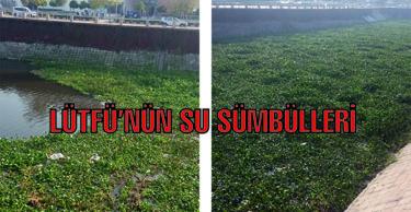 """LÜTFÜ """"SU SÜMBÜLLERİNDEN"""" VAZGEÇMEDİ"""
