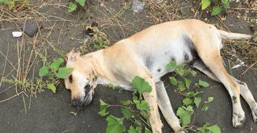 Hatay'da 3 köpek zehirlenerek telef edildi