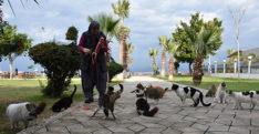 Sahipsiz kedilerin Fadime annesi
