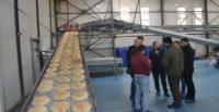Günde 1 milyon ekmek üretiyorlar