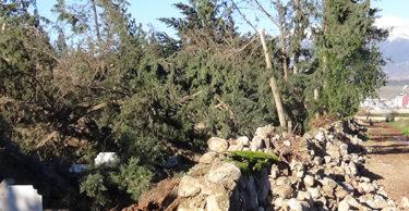 Hatay'da ağaçlar devrildi, hasara yol açtı
