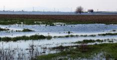 Hatay'daki yağışlar 78 bin dekar tarım alanına zarar verdi