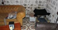 İşletmenin odasını kediler için kapattı