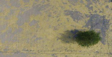 Göle dönen Amik Ovası'ndaki su seviyesi azaldı