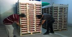 Yayladağı çileği Rusya'ya ihraç edilecek