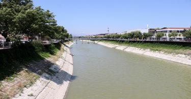 Asi Nehri'nde balık ölümleri