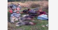 Oklu kirpi avlayanlara para cezası