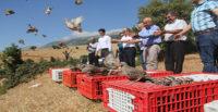 Amanoslar'da doğaya bin keklik salındı