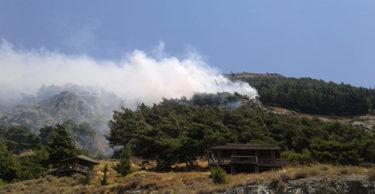Çocukların attığı maytap orman yangınına neden oldu