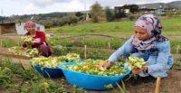 Rengarenk çiçekler kadınların elinde açıyor