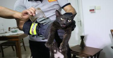 """Hatay'da kurtarılmaya çalışılan """"inatçı"""" kedi yakalandı"""