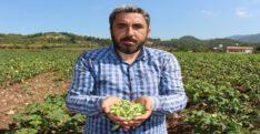 """Yöneticiliği bırakıp çiftçi oldu, """"Huzuru tarımda buldum"""" dedi"""