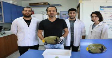 """Akdeniz'de rastlanan balığa """"Fenerbahçe"""" adı verildi"""