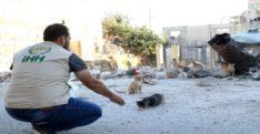 İHH Kafranbel'deki sokak hayvanlarını unutmadı
