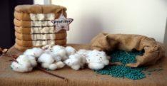 Yerli pamuk tohumlarını 7 ülkeye ihraç ediyorlar