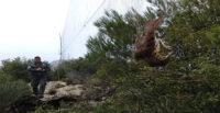 Hatay'da yasa dışı kurulan ağlara takılan kuşlar doğaya salındı