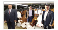 ERCAN DAYAKLI, AHMET TOYSAL ''YETER'' SİZE