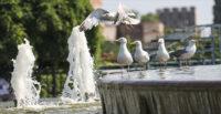 TÜRKİYE 'EYYAM-I BAHUR' SICAKLARININ ETKİSİ ALTINA GİRİYOR